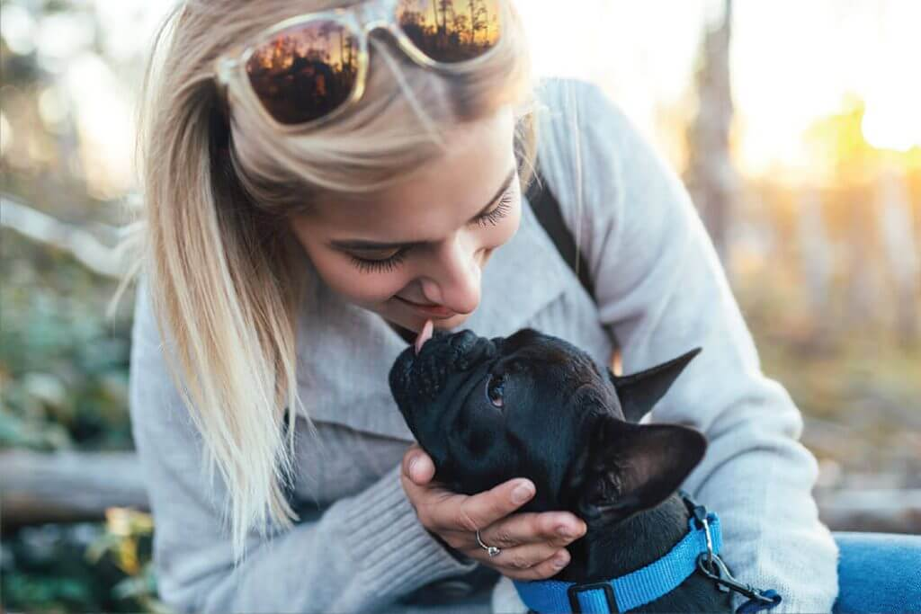 amenity pets 1024x683